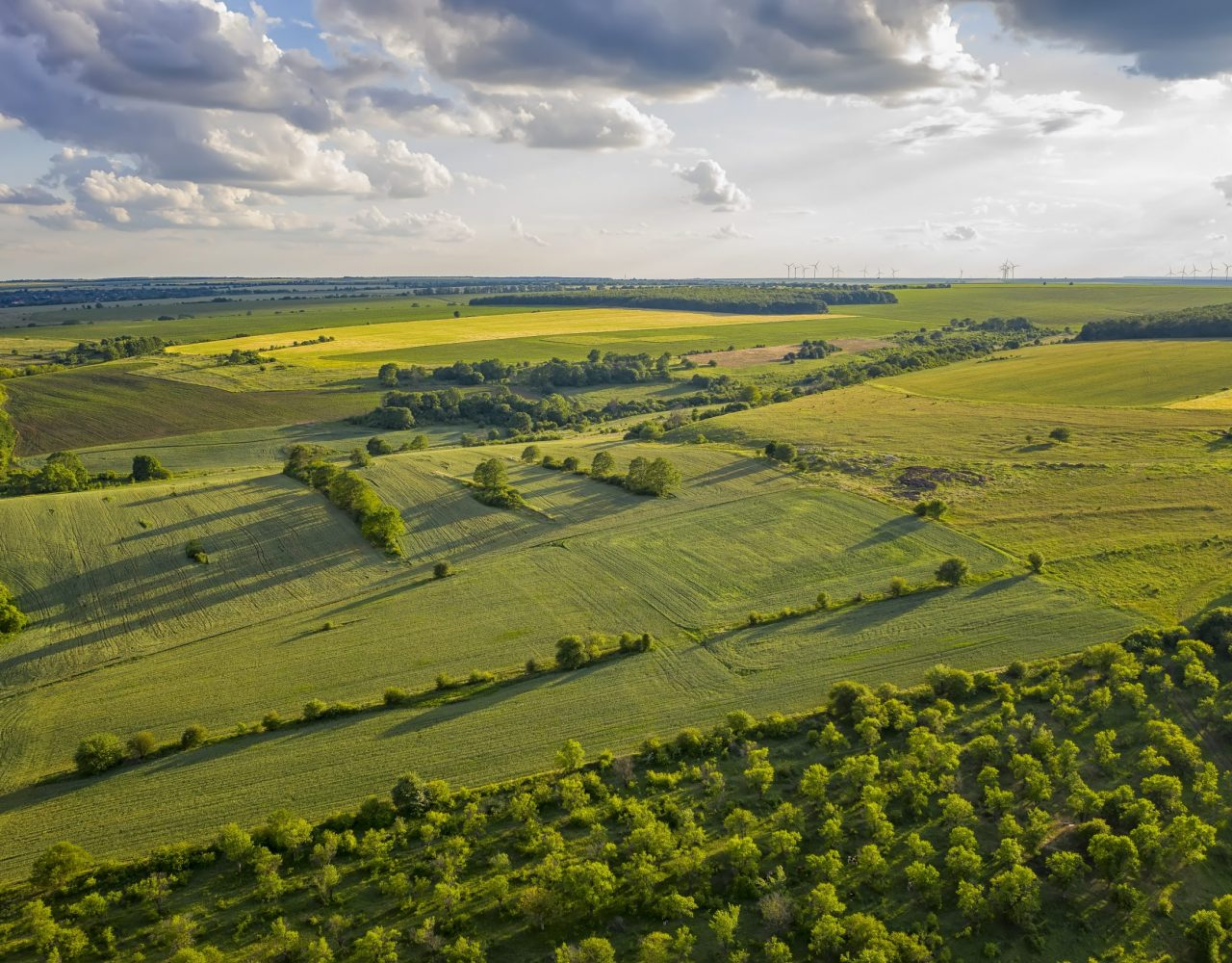 Aerial view from drone of a beautiful fresh green rural scene at summer